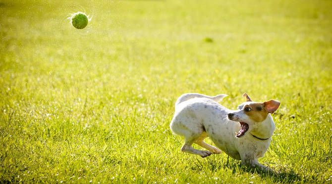 Psi park najlepsze miejsce na spacery z psem w Tychach